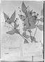 Field Museum photo negatives collection; Genève specimen of Myrcia gardneriana O. Berg, BRAZIL, G. Gardner 2605, Isotype, G