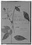 Field Museum photo negatives collection; Genève specimen of Myrcia sericea O. Berg, PERU, E. F. Poeppig 1675, Isosyntype, G