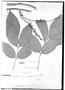 Field Museum photo negatives collection; Genève specimen of Paullinia fraxinifolia Triana & Planch., COLOMBIA, J. J. Triana, Type [status unknown], G
