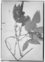 Field Museum photo negatives collection; Genève specimen of Paullinia interrupta Benth., BRAZIL, R. Spruce, Type [status unknown], G