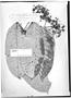 Field Museum photo negatives collection; Genève specimen of Sloanea floribunda Spruce ex Benth., BRAZIL, R. Spruce, Type [status unknown], G