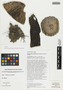 Browningia candelaris (Meyen) Britton & Rose, Peru, T. Anderson 8063, F