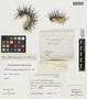 Copiapoa coquimbana (Karw.) Britton & Rose, Chile, E. Werdermann 872, F