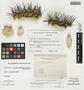 Copiapoa marginata (Salm-Dyck) Britton & Rose, Chile, E. Werdermann 908, F