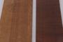 Casuarina equisetifolia L., Beefwood Shingles, AUSTRALIA, F