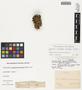 Coryphantha macromeris (Engelm.) Lem., U.S.A., C. R. Orcutt, F
