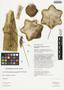 Corryocactus puquiensis Rauh & Backeb., Peru, T. Anderson 7920, F