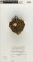 Stenocactus coptonogonus (Lem.) A. Berger ex A. W. Hill, MEXICO, L. Eschanzier 4, F