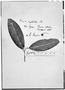 Field Museum photo negatives collection; Genève specimen of Cleyera syphilitica Choisy, M. Sessé, Type [status unknown], G