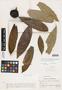 Duguetia quitarensis Benth., Venezuela, Ll. Williams 13197, F