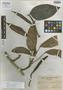 Rhaphidophora acuminata Merr., PHILIPPINES, C. A. Wenzel 1139, Isotype, F