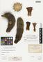 Echinocereus triglochidiatus var. polyacanthus (Engelm.) L. D. Benson, U.S.A., C. G. Pringle s.n., F