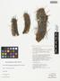 Haageocereus decumbens (Vaupel) Backeb., Peru, T. Anderson 7875, F