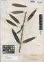 Dendrobium agusanense Ames, PHILIPPINES, A. D. E. Elmer 13462, Isotype, F