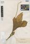 Malaxis negrosiana Ames, PHILIPPINES, A. D. E. Elmer 9600, Isotype, F