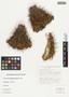 Melocactus ruestii K. Schum., Honduras, B. S. White, F
