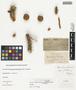 Opuntia acanthocarpa Engelm. & J. M. Bigelow, U.S.A., J. W. Toumey s.n., F