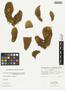 Opuntia basilaris var. brachyclada (Griffiths) Munz, U.S.A., L. C. Wheeler s.n., F