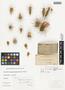 Opuntia echinocarpa Engelm. & J. M. Bigelow, U.S.A., J. W. Toumey 27, F