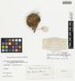 Opuntia polyacantha var. trichophora (Engelm. & J. M. Bigelow) J. M. Coult., F. V. Coville, F