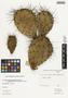Opuntia phaeacantha var. camanchica (Engelm. & J. M. Bigelow) L. D. Benson, U.S.A., W. H. Evans s.n., F