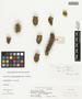 Opuntia whipplei Engelm. & J. M. Bigelow, U.S.A., J. W. Toumey 4, F