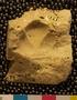 PE4424_fossil