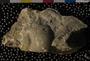 PE4358_fossil