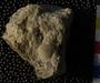 PE4361 fossil