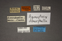 95005 Agonopterix dimorphella PT labels IN