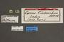 95015 Cossus cadambae HT labels IN