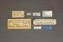 95016 Trochilium grande HT labels IN