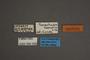95009 Carmenta haematica PT labels IN