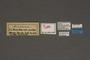 95034 Telea polyphemus HT labels IN
