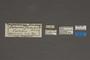 95035 Saturnia arnobia HT labels IN