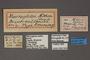 95045 Macroglossa aethra HT labels IN