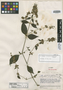 Dicliptera porphyrocoma Leonard, VENEZUELA, J. A. Steyermark 61875, Isotype, F