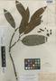 Guatteria heteropetala Benth., BRITISH GUIANA [Guyana], R. H. Schomburgk 950, Isotype, F