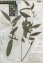 Hornschuchia caudata R. E. Fr., BRITISH GUIANA [Guyana], A. C. Smith 2130, Isotype, F