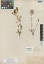 Cogswellia vaseyi image