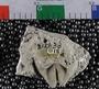 PE4318_fossil
