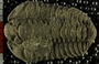 UC5269_fossil