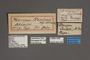 95056 Pterogon terlooii HT labels IN
