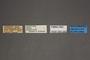 95060 Dalaca quadricornis PT labels IN