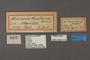 95075 Macaria aucillaria HT labels IN