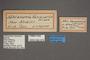 95078 Metanema vanusaria HT labels IN