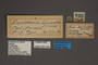 95084 Eupithecia laisata HT labels IN