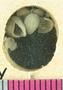 PE57056_fossil