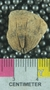 PE61237_fossil