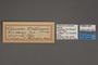 95100 Chlorosea undinaria HT labels IN